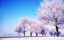 37549084-pictures-of-winter