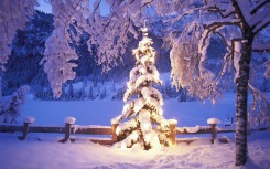 christmas-tree-desktop-backgrounds-5
