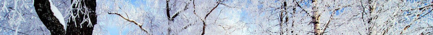 cropped-winter-03.jpg