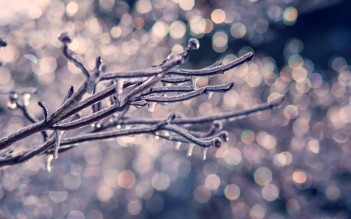 Frozen Purple Winter Ice Lights Branch Icicles Macro Wallpaper Animated